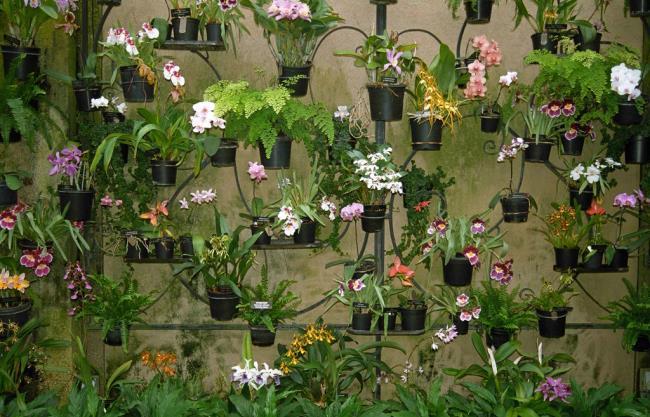 Die schönen Orchideenwandbilder 28