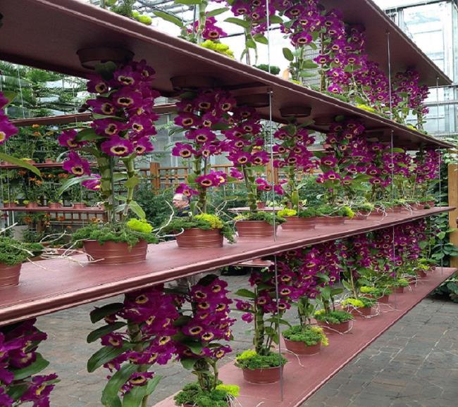 Die schönen Orchideenwandbilder 29