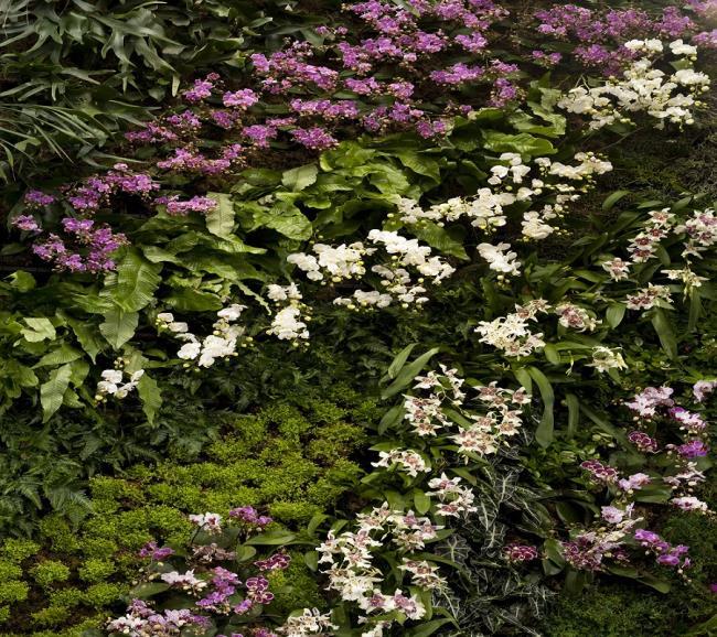 Die schönen Orchideenwandbilder 30