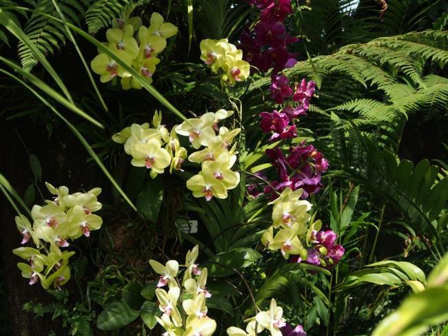 Schöne Waldorchideen Bilder 32