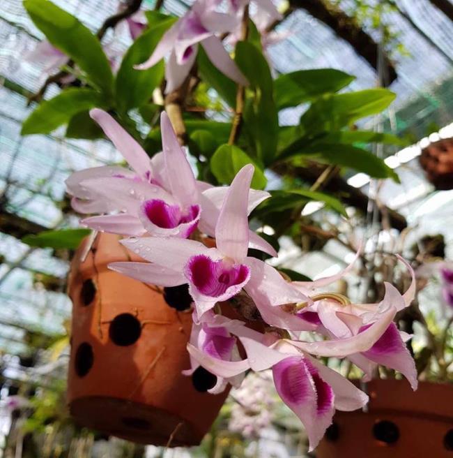 Schöne Orchideenbilder 33