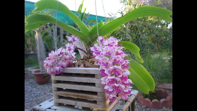 Schöne Waldorchideen Bilder 34
