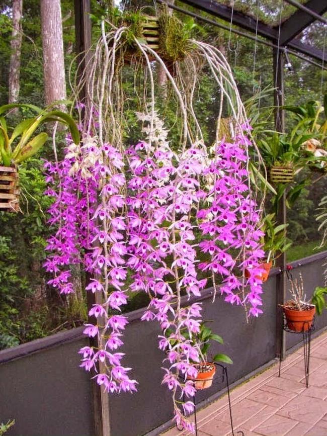 Schöne Waldorchideen Bilder 36