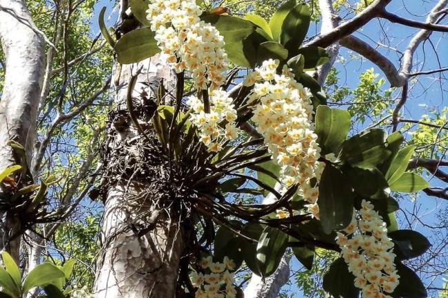 Schöne Waldorchideenbilder 38