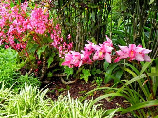 Schöne Waldorchideenbilder 39