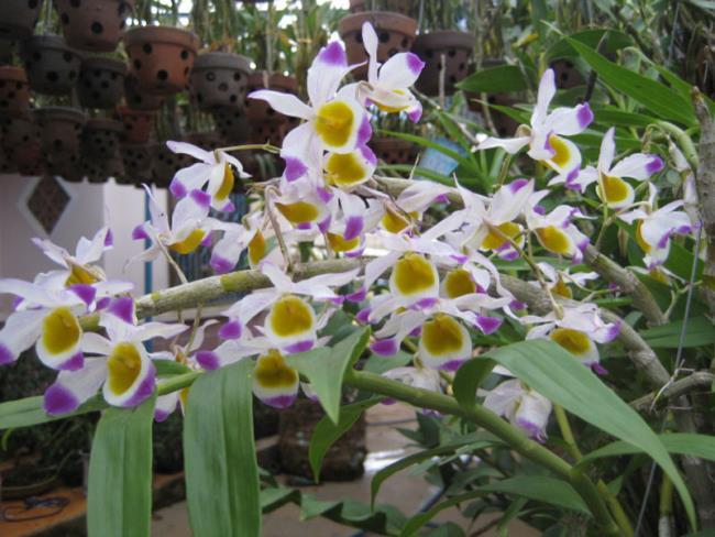 Schöne Waldorchideen Bilder 40