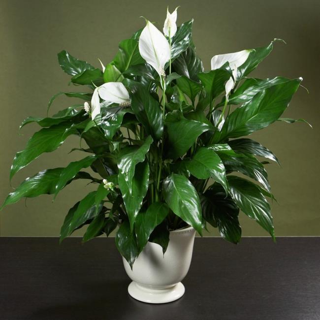 Schöne Orchideenbilder 41