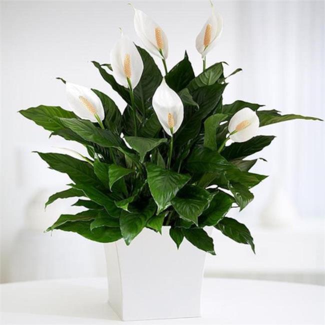 Schöne Orchideenbilder 42