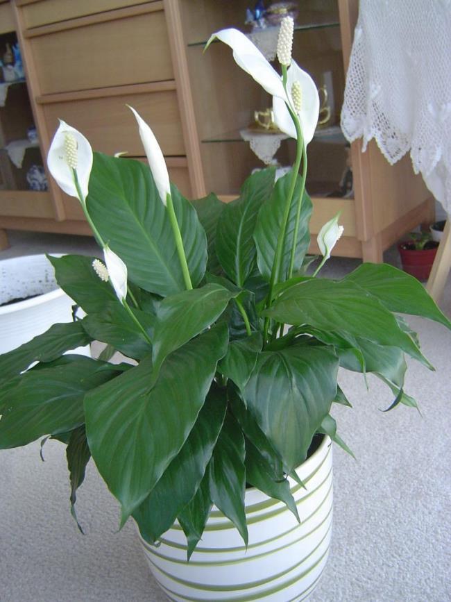 Schöne Orchideenbilder 43