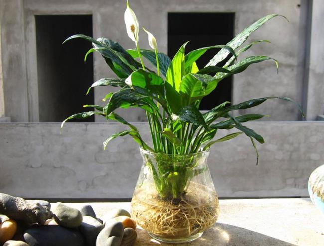 Schöne Orchideenbilder 44