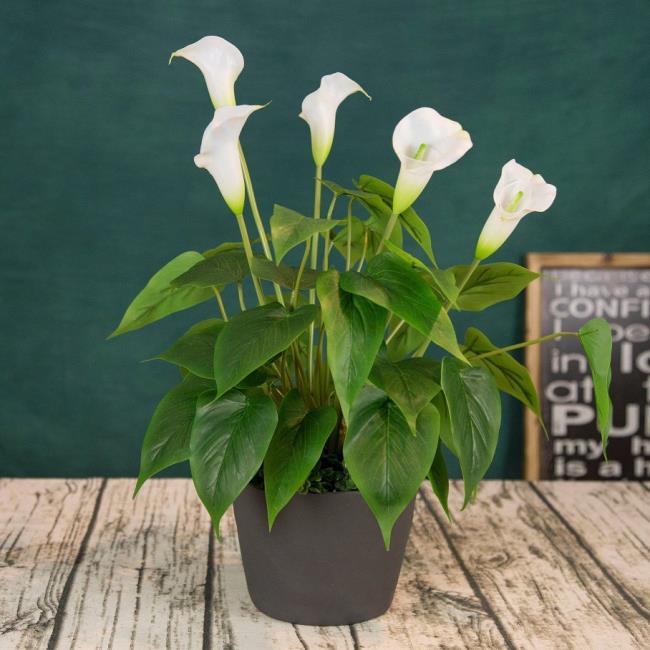 Schöne Orchideenbilder 46