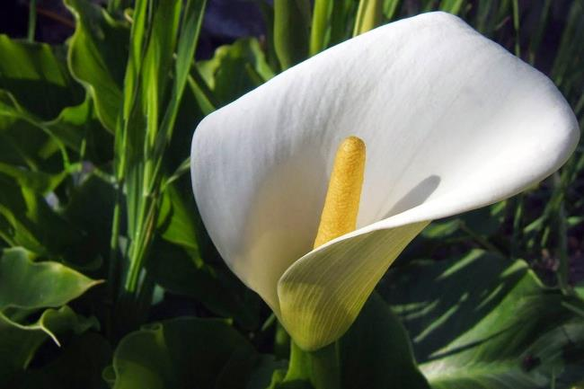 Schöne Orchideenbilder 47