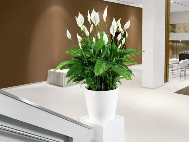 Schöne Orchideenbilder 48