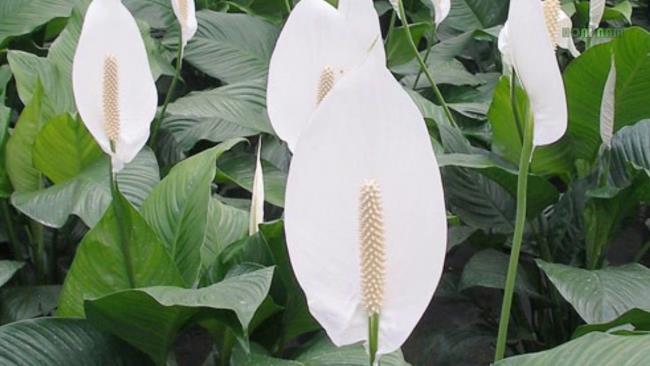 Das schöne Orchideenbild 49