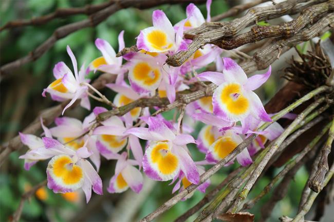 Schöne Orchideenbilder 50