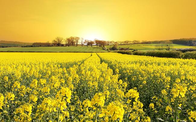 أفضل 50 صورة خلفية صفراء أجمل