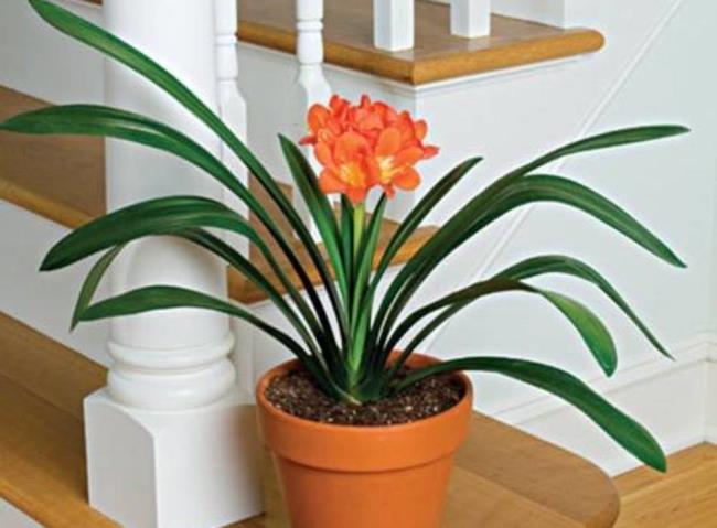 Bilder der schönen Militärorchidee 60