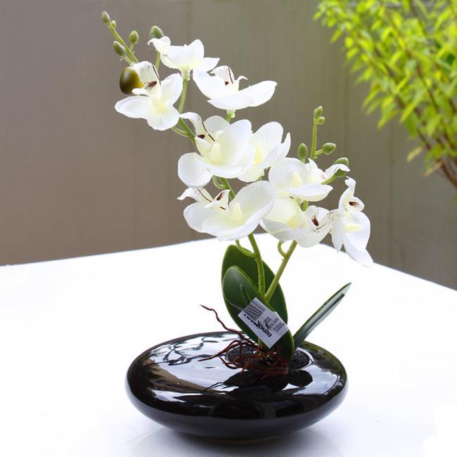 Die schönen weißen Orchideenbilder 63