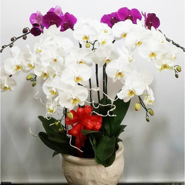 Die schönen weißen Orchideenbilder 69