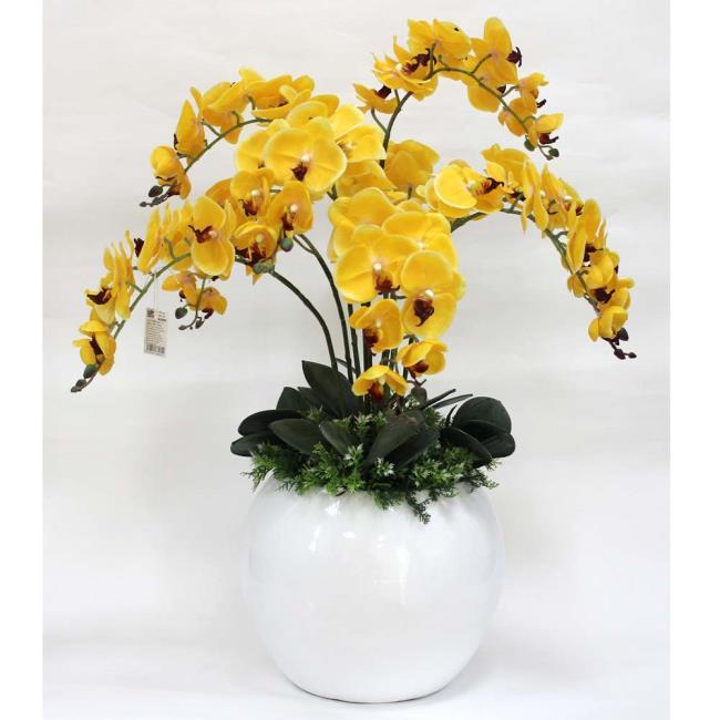 Die schönen gelben Orchideen 76