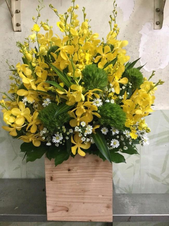 Das schöne gelbe Orchideenbild 78