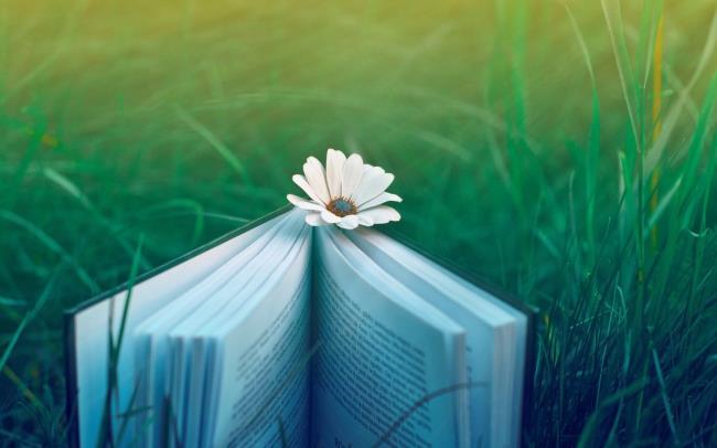 सबसे सुंदर पुस्तक पृष्ठभूमि का संग्रह