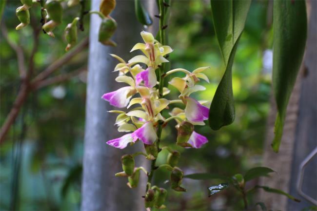 Das schöne Orchideenschönheitsbild 89