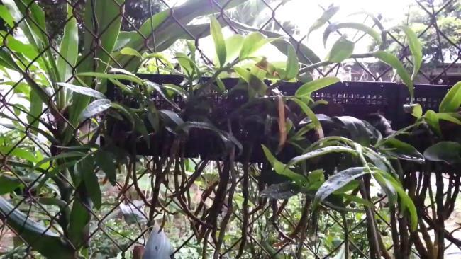 Das schöne Orchideenschönheitsbild 90