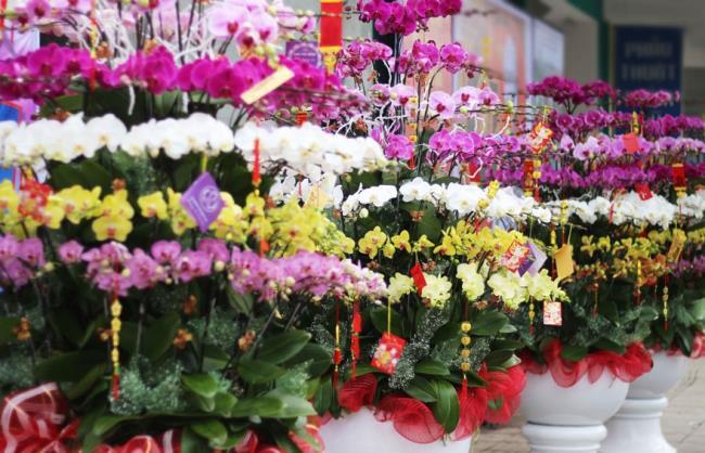Die schönen Orchideenbilder 92