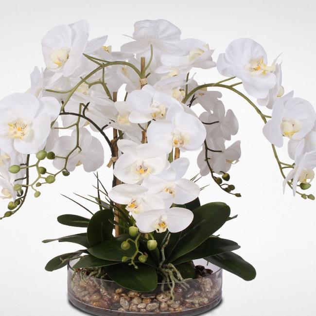 Schöne Orchideenbilder von Orchideen 93