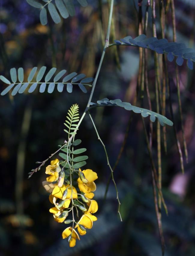 Afbeeldingen combineren van de mooiste gekke bloemen
