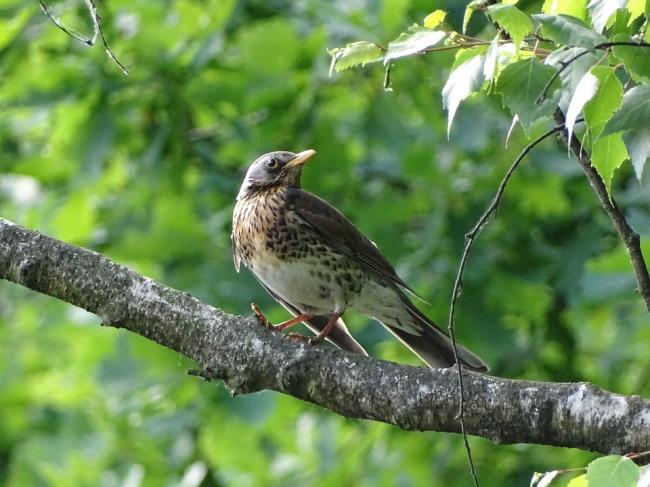 सबसे सुंदर पक्षी एम आई तस्वीर का सारांश