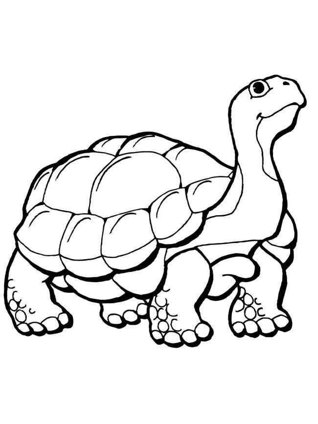 مجموعة من أجمل صور تلوين السلاحف لطفلك