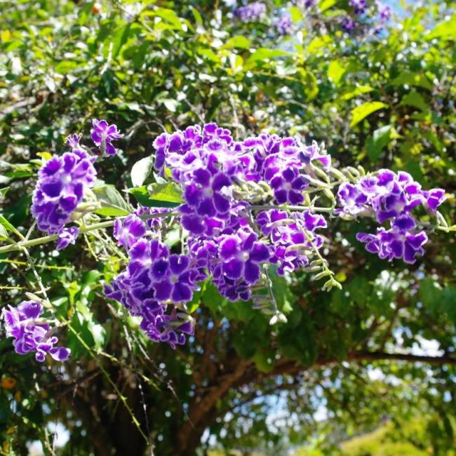 सबसे सुंदर मोती स्ट्रिंग फूलों की छवियों का संयोजन