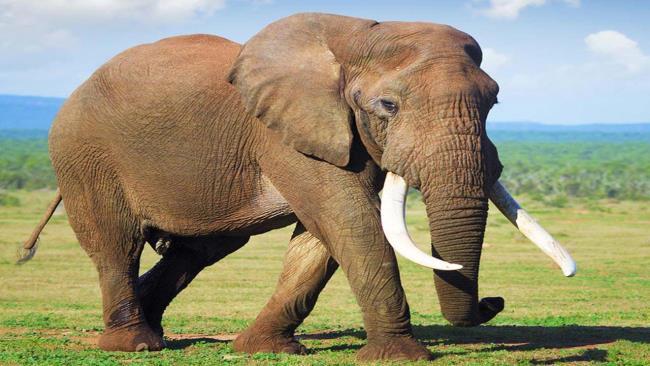 Rezumatul celui mai frumos Elefant