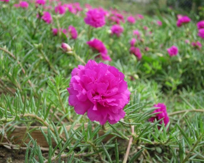Photos dix belles fleurs signifient