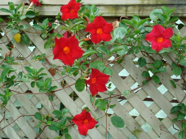 सबसे सुंदर गुलाब की छवियों का संग्रह