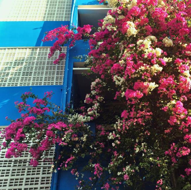 सुंदर कागज फूल फ्रेम छवियों
