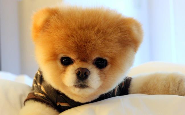تصاویر توله سگ ناز به عنوان تصویر زمینه زیبا