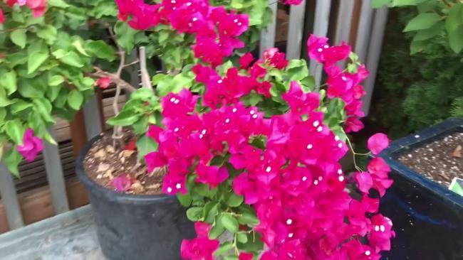 सुंदर कागज फूल पॉट छवि