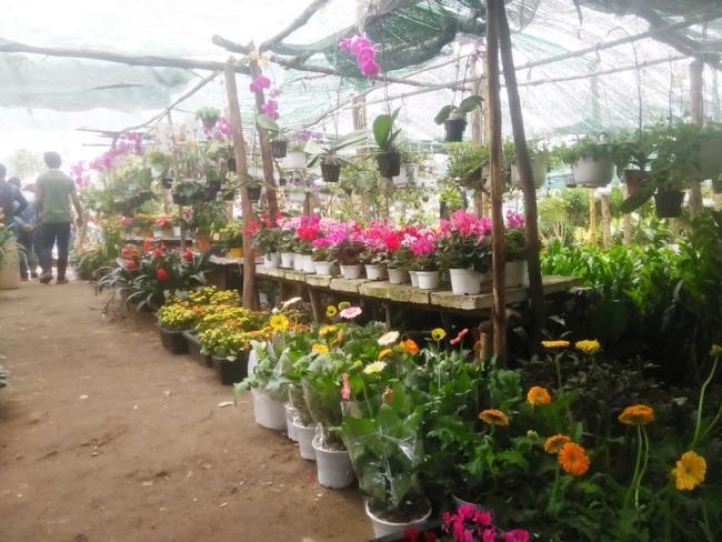 Pictures of beautiful gerberas