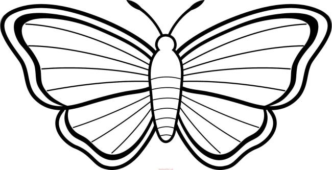 Collection of butterfly coloring for girls