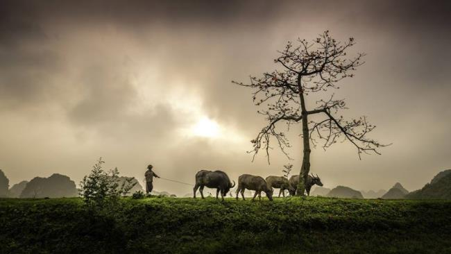 Коллекция изображений буйволов имеет много значений