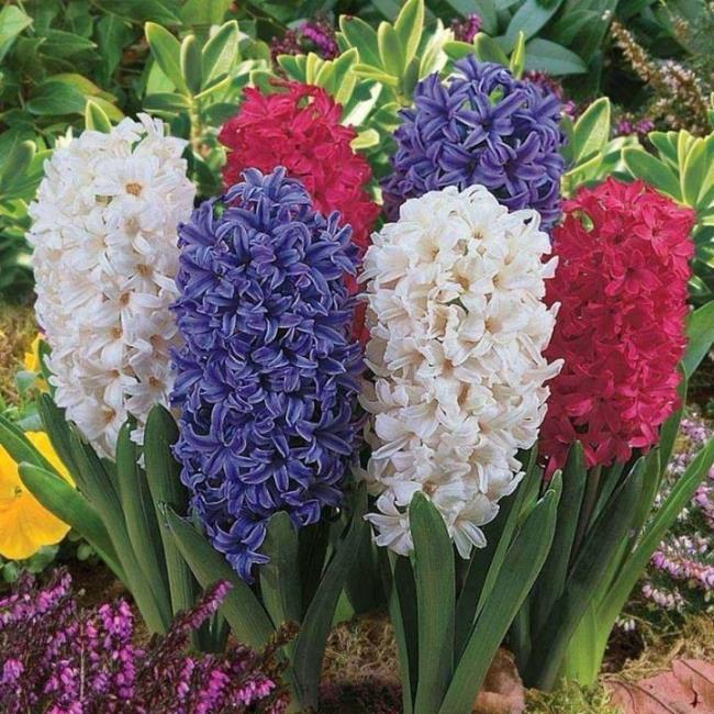 सबसे सुंदर परी फूल की छवियों का मेल