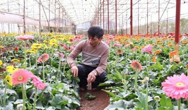 Pictures beautiful flower gerbera