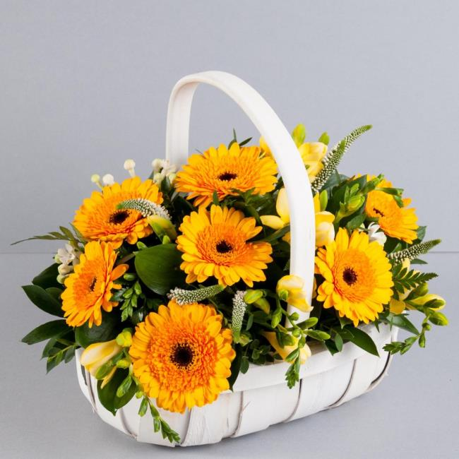 Beautiful flower gerbera