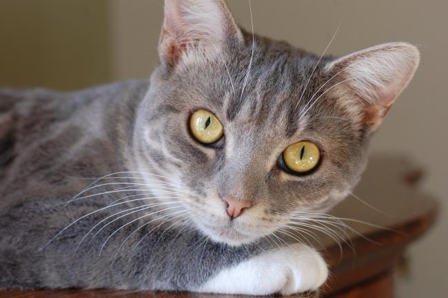 सबसे सुंदर बिल्ली की तस्वीर का सारांश