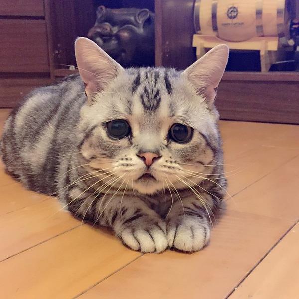 Résumé de la plus belle photo de chat