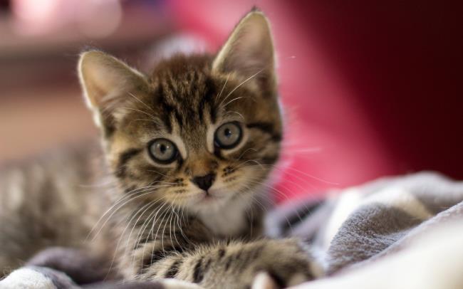 निःशुल्क प्यारा प्यारा बिल्ली के बच्चे की छवियों का संग्रह