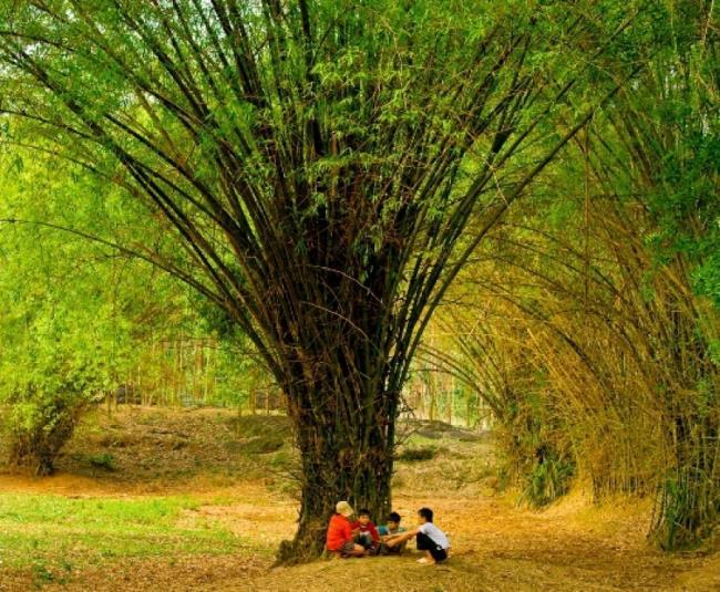 Gambar desa bambu di Vietnam